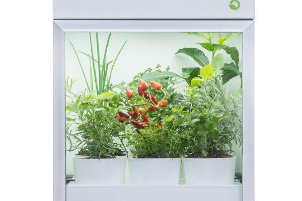 Fotografia de produto para PLANTÁRIO.